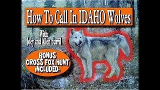 """HOW TO"" CALL IN IDAHO WOLVES: With Bonus Cross Fox Hunt"