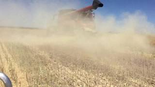 Seed Terminator fitted to Case IH 7240 Axial Flow Yerecoin Western Australia