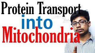 Protein transport in mitochondria
