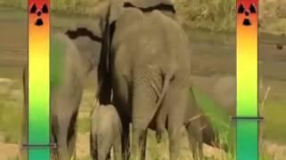 Самые смешные приколы с дикими животными  Fun with wild animals