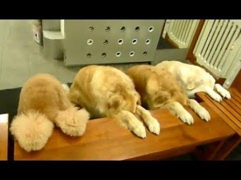 Смешные собаки ждут команды перед едой. Видео подборка NEW