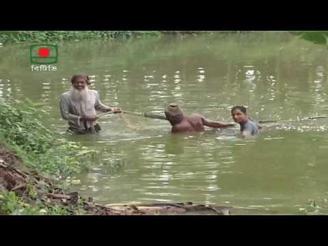 মাটি ও মানুষ(মাছ চাষ-নাটোর)।Mati O Manus -Fish