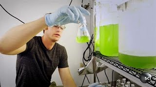 Algae Fuel Could Change the World | World's Strangest