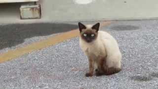 捨て猫 ミーちゃんと同じ 捨て猫が居ました。