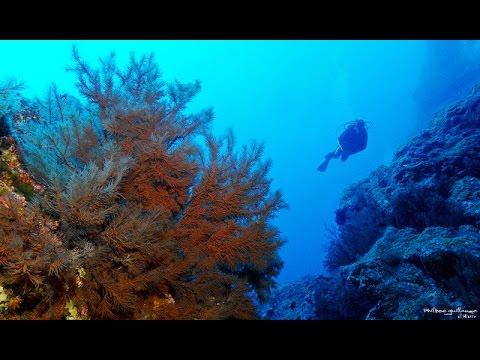 Tauchen auf La Gomera, Playa de la Cueva, Kanarische Insel/La Gomera - Playa La Cueva / San Sebastian,Spanien