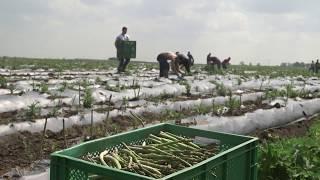 Meet Our Asparagus Farmer