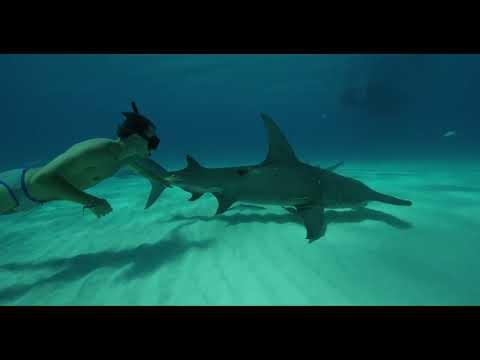 SHARKWATER EXTINCTION Trailer