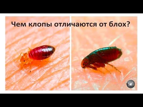 Лечение паразитов в организме человека лечение
