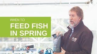 When to Start Feeding Pond Fish in Spring