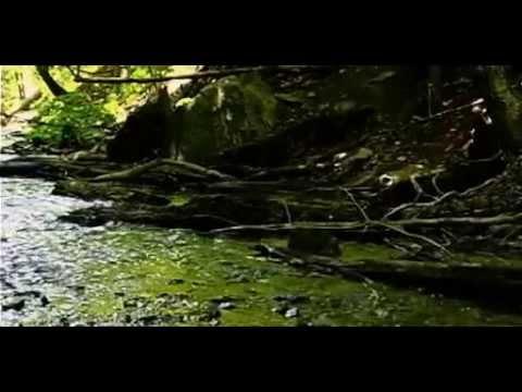 Aliens VS Predator S E E D - full movie