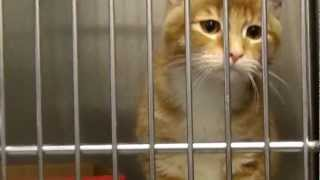 Corona: Animal shelter awaits a new home