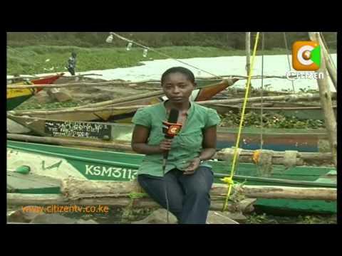 Aquatic weed choking life in Lake Victoria