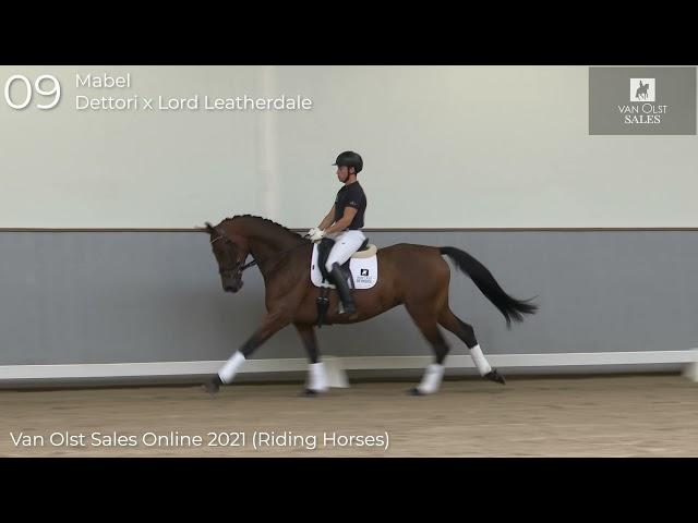Mabel under saddle