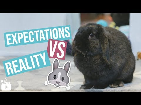 Download Expectations VS Reality BUNNY EDITION Mp4 HD Video and MP3