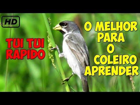PAPA BAIXAR TUI PURO CD CAPIM TUI