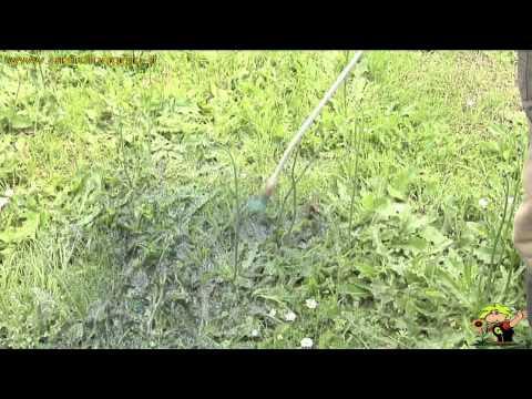 trattamento selettivo erbe infestanti