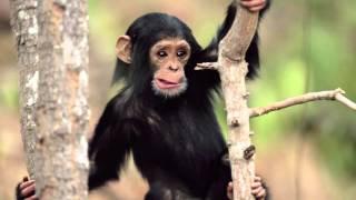 Sonidos de animales para bebes y niños 😻❤