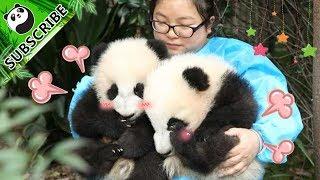 【Panda Theme】A Day With Nanny | iPanda