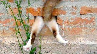 Funny CAT FAILS that will make you POOP YOUR PANTS FROM LAUGHING - Best CAT compilation - Video Youtube