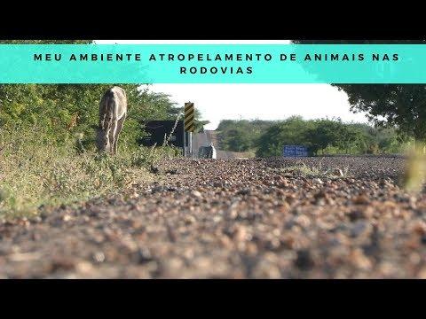 Atropelamento de animais nas rodovias