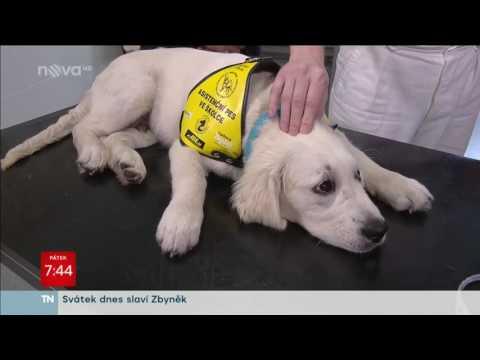 _label_product_video Kiltix obojek pro střední psy a.u.v.53cm