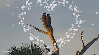SWFL Eagles. ~Hard To Say Goodbye...