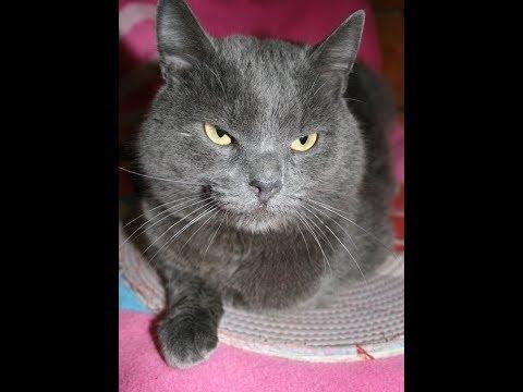 Возьмите кота из приюта в Москве!