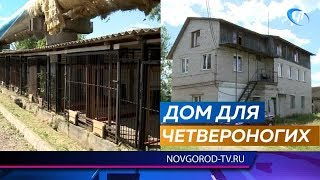 В Великом Новгороде идет ремонт в приюте для содержания безнадзорных животных