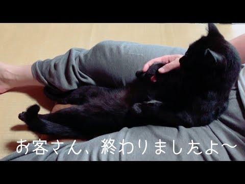 猫もとろける極上肉球マッサージ Cat Paw Massage