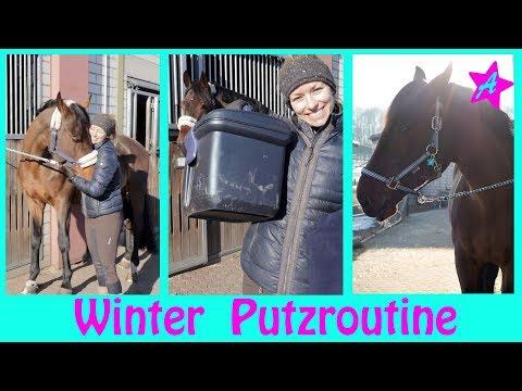 PUTZROUTINE & Kuscheln I Pferde Pflege in den kalten Monaten I Winter Edition