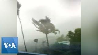 Trees Thrash Around Violently As Hurricane Dorian Hits US Virgin Islands