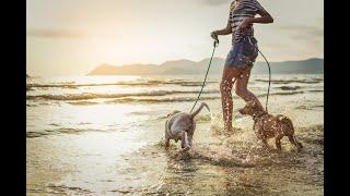 Dog Lovers' Journey: Puppyhood Dog Videos