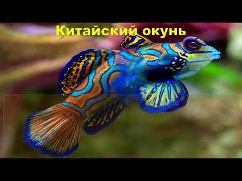 ТОП Самые красивые аквариумные рыбки. TOP most beautiful aquarium fish