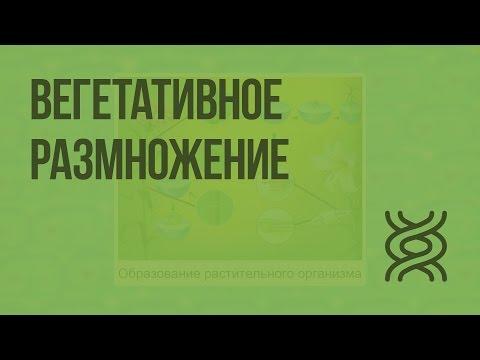 Вегетативное размножение. Видеоурок по биологии 6 класс