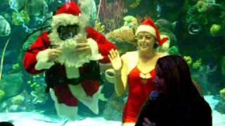 Santa swims with the Mermaids at Silverton Casino Lodge Video