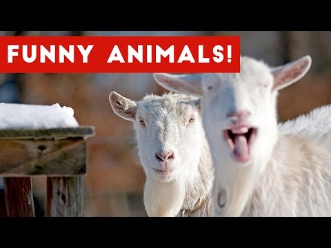 Funniest Animal Clips, Outtakes & Bloopers of December 2016 Weekly Compilation   Funny Pet Videos