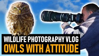 Photographing Owls With ATTITUDE: The LITTLE OWL | Wildlife Photography Vlog
