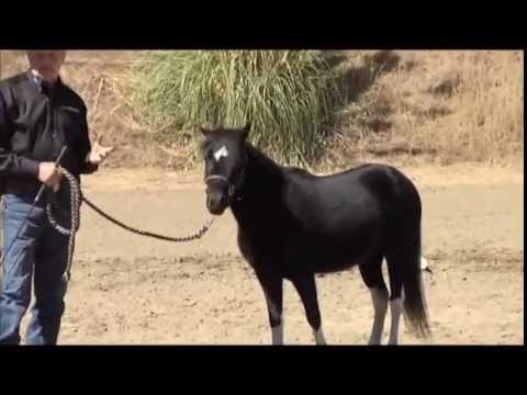 Training the Therapy Horse - YouTube