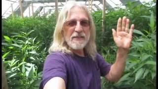 Grow Marijuana: Light Deprivation (Dep) Greenhouse