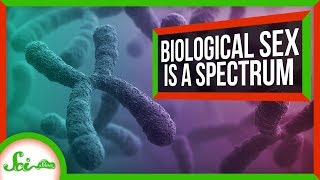 There Are More Than Two Human Sexes by  SciShow