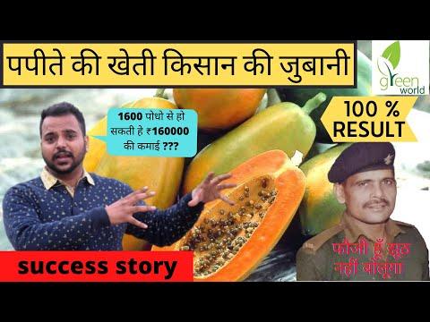 100% Original Red Lady Hybrid Papaya Seeds