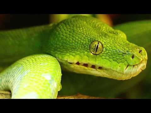 Green Snake Dream - Dream Meaning and Interpretation