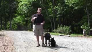 Walking Two Dogs On Leash - Connor and Banoffee - Winston-Salem Dog Training