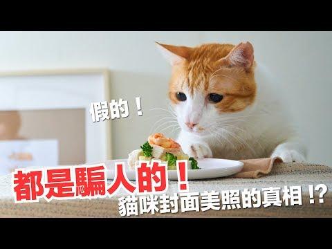 貓咪雜誌都是怎麼拍攝的?