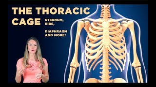The Thoracic Cage: The Sternum, Manubrium, xiphoid process and more!