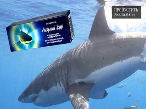 акулий жир инструкция по применению