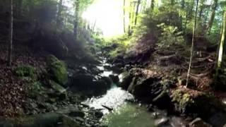 Forest Switzerland 360 VR Video [4K]