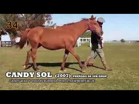 Lote CANDY SOL
