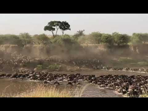 Legendary Expeditions - The Great Migration
