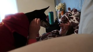 A DOG AND A GIRAFFE?!?! | Daily Dose S2Ep86